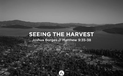 Seeing The Harvest